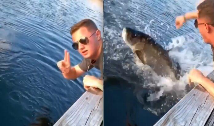 Fisk angriber