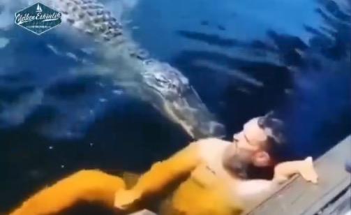 Bidt af krokodille